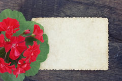 Vintage background with scarlet geranium Stock Photos