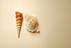 Vintage background with seashells. Tower shells (turitella) and Muricidae Stock Images