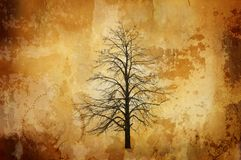 Vintage background with single tree Royalty Free Stock Photography