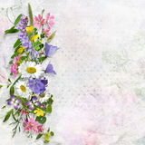 Vintage background with space for text or photo and a bouquet of summer meadow flower Royalty Free Stock Photography