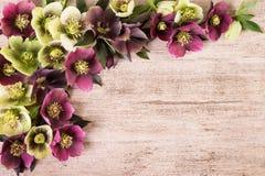 Vintage background with spring flowers arrangement pastel colors. Copy space, flat lay. Vintage flowers background hellebore flowers arrangement in pastel color stock image