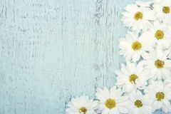 Vintage background with white daisies Stock Image