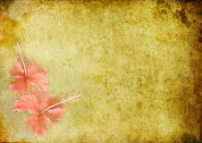 Vintage Background With A Hibiskus Stock Photo