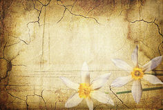 Vintage Background With Flowers Narcissus Stock Image