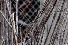 Vintage bamboo rattan close-up of a dilapidated retro worn fence held together with rusted wire, chain link fence in background. A texture in shades of tan stock photos