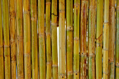 Vintage bamboo wall Royalty Free Stock Images