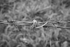 Vintage barbed wire. Close up, monochrome photo Stock Image