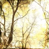 Vintage bare branches background Royalty Free Stock Photo
