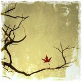 Vintage bare branches with small leaf of maple Stock Image