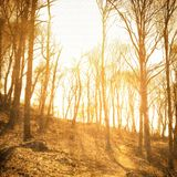 Vintage bare trees in sepia tones Royalty Free Stock Photos
