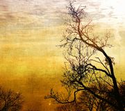Vintage bare trees in sunset Stock Images