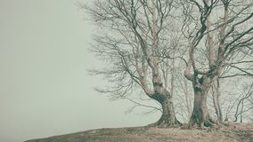 Vintage bare trees in winter. With copy space stock photo