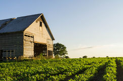 Vintage barn in the afternoon light. Stock Image