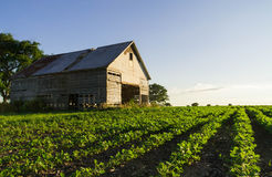 Vintage barn in the afternoon light. Stock Images