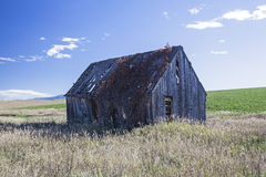 Vintage barn vines prairie field. Rotten old farm shed or homestead is abandoned in grassy meadow and overgrown with vegetation Royalty Free Stock Image