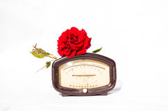 Vintage barometer and scarlet rose Stock Photography