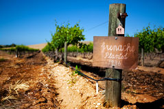 Vintage Barossa Vineyard. Row of vines in the Barossa Valley - focus on sign post royalty free stock images