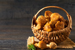 Vintage basket of chanterelles mushrooms Royalty Free Stock Image