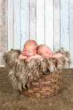 Vintage basket with twin babies Stock Photography