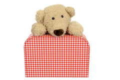 Vintage bear looking from above a checked suitcase Royalty Free Stock Images