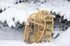 Vintage bear Paw snowshoes spruce tree snow Royalty Free Stock Photo