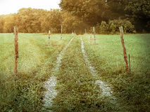 Vintage beaten track through meadow with rays of ligh. Beaten track or worn path through meadow toward foliage trees with poles around, center composition Royalty Free Stock Images