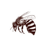 Vintage bee illustration Royalty Free Stock Photography