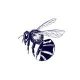 Vintage bee illustration Stock Photos