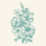 Vintage begonias. Vintage etching vector illustration of a bouquet of begonia flowers Royalty Free Stock Photo