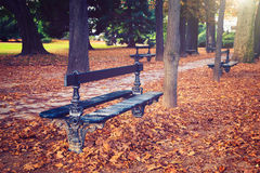 Vintage bench in Luxembourg Gardens, Paris, Stock Image