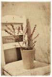 Vintage berries Stock Image