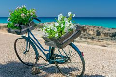 Vintage bicycle adapted for flower arrangement bicycle with bas stock images