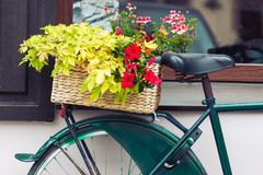 Vintage bicycle with basket full of blooming flowers. Vintage bicycle detail with basket full of blooming flowers at summer royalty free stock image