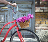 Vintage bicycle with basket with peony flowers Royalty Free Stock Photos