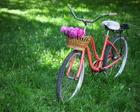 Vintage bicycle with basket with peony flowers Royalty Free Stock Images