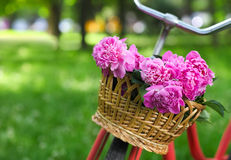 Vintage bicycle with basket with peony flowers Stock Photography
