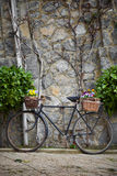 Vintage bicycle with bunches of flowers Stock Images