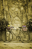 Vintage bicycle with bunches of flowers Stock Photo