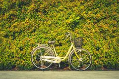 The vintage bicycle on colorful leaves wall background. Classic bike is friendly of environmental stock image