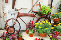 Vintage Bicycle Displayed in Flower Garden Stock Photo