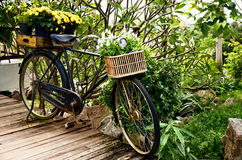 Vintage bicycle with flower in basket Stock Photo