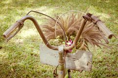 Vintage bicycle with flower grass Royalty Free Stock Photography