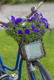 Vintage bicycle with flowers in a basket Royalty Free Stock Photo