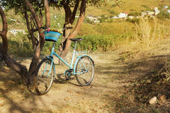 Vintage bicycle. At forest path. summer sunny day Stock Photography