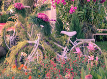 Vintage bicycle garden Stock Images