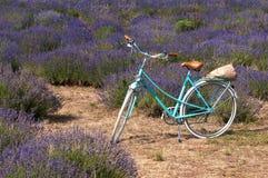 Vintage bicycle in lavender meadow. Blue vintage bicycle in lavender meadow Royalty Free Stock Image