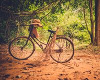 Vintage bicycle standing in the forest Stock Photography