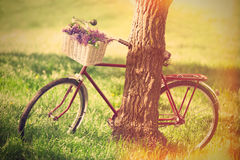 Vintage bicycle Stock Images