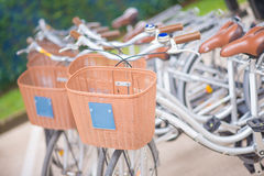 Vintage bicycles with brown barket Stock Image