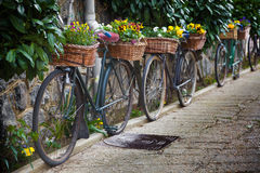 Vintage bicycles with bunches of flowers Stock Image